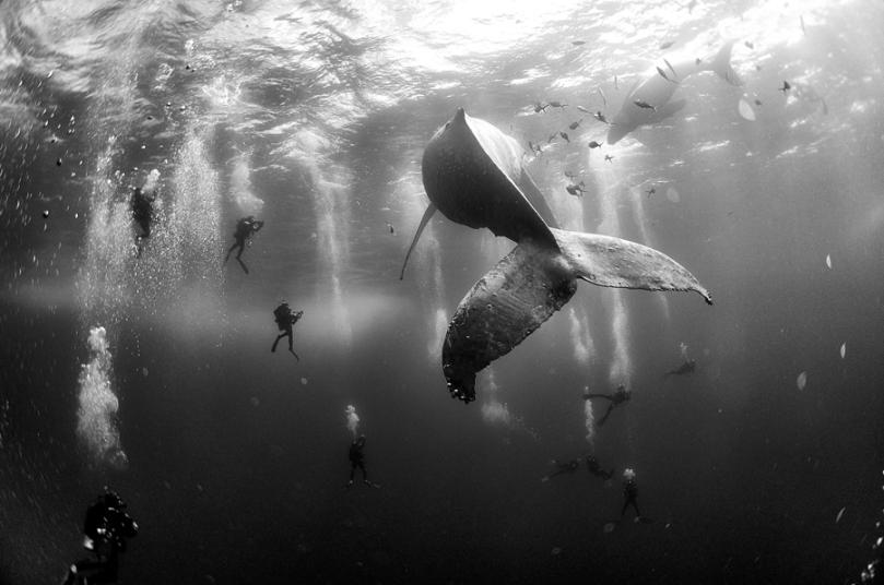 Nature, 2e prix – Photos uniques Anuar Patjane Floriuk, Mexique Murmures aux baleines 28 janvier 2015. Une baleine à bosse et son nouveau-né nagent près de Roca Partida, petite île de l'archipel de Revillagigedo, au large de la côte Pacifique du Mexique. Durant la saison des amours, les eaux de l'île abritent la plus importante population de baleines à bosse, étant ainsi une destination prisée pour la plongée sous-marine. Ces îles volcaniques sont inhabitées, hormis une légère présence navale. Elles ont été déclarées réserve de la biosphère en 1994 et sont à l'étude pour devenir site du patrimoine naturel de l'UNESCO.
